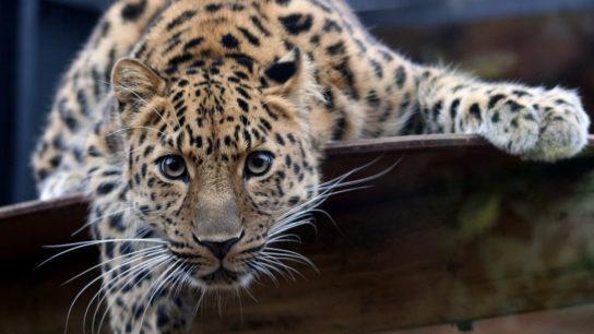 Biodiversity Series: Critically Endangered Species