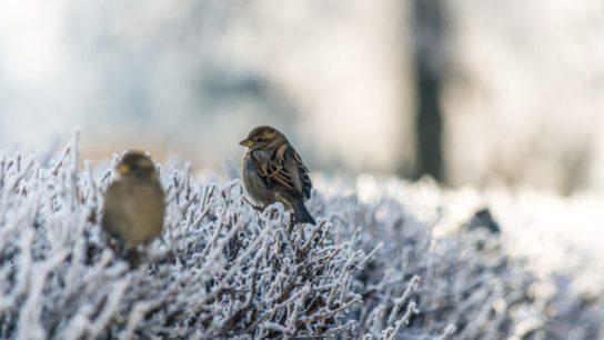 Biodiversity Crisis: North America Lost 2.9 Billion Birds Since 1970