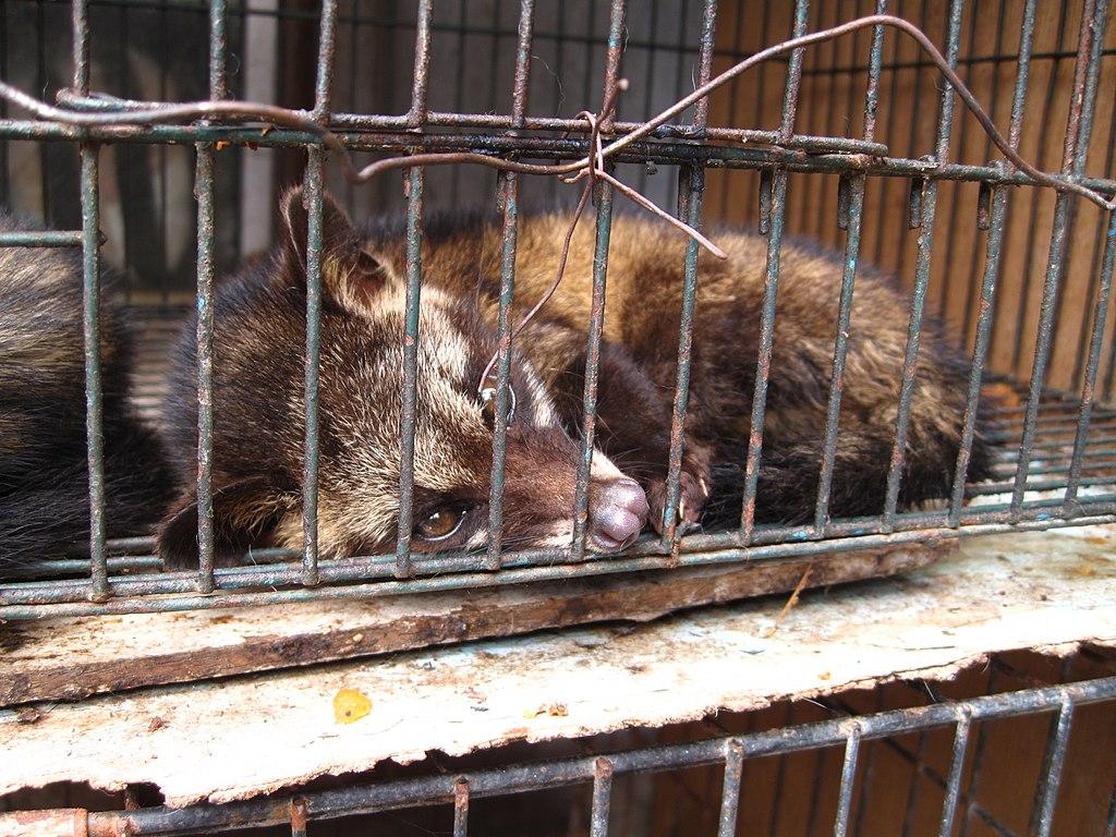 china buyouts wildlife farmers