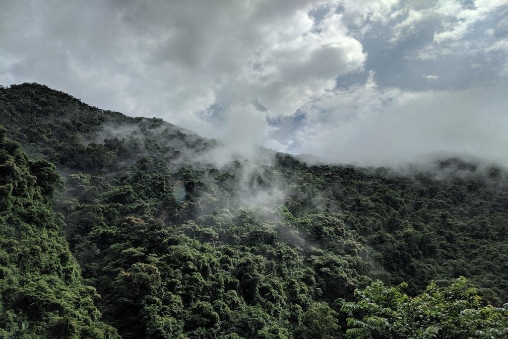 World Rainforest Day: The World's Great Rainforests