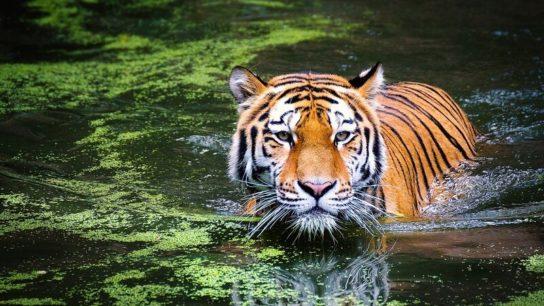 Sixth Mass Extinction of Wildlife Accelerating- Study