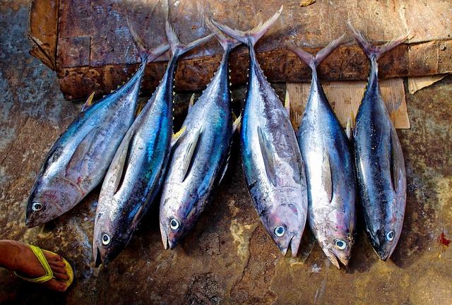 illegal tuna fishing