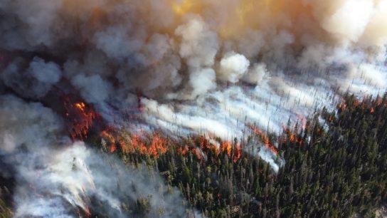 AI and Wildfire Prediction
