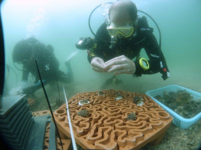 hong kong corals