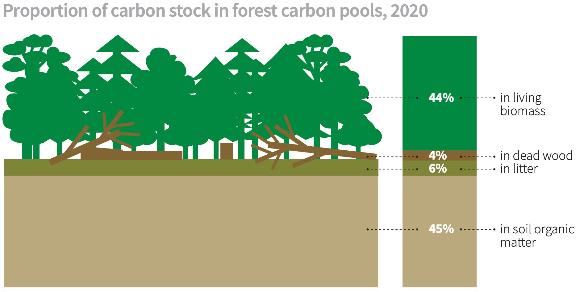 forest carbon storage