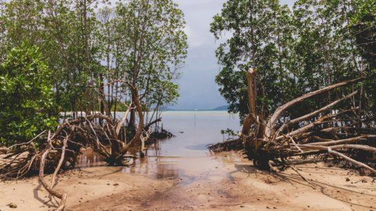 The True Value of Mangroves