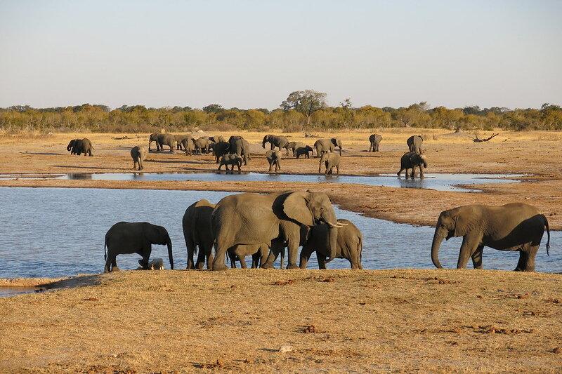 Mining Firms in Zimbabwe Conservation Areas Threaten Endangered Species
