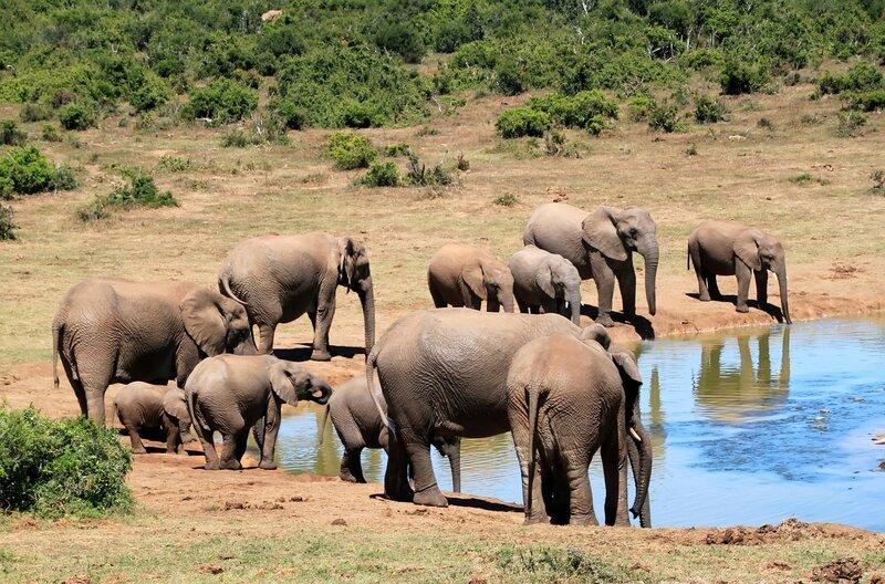 Mass Elephant Die-Off Mystery Solved- Botswana