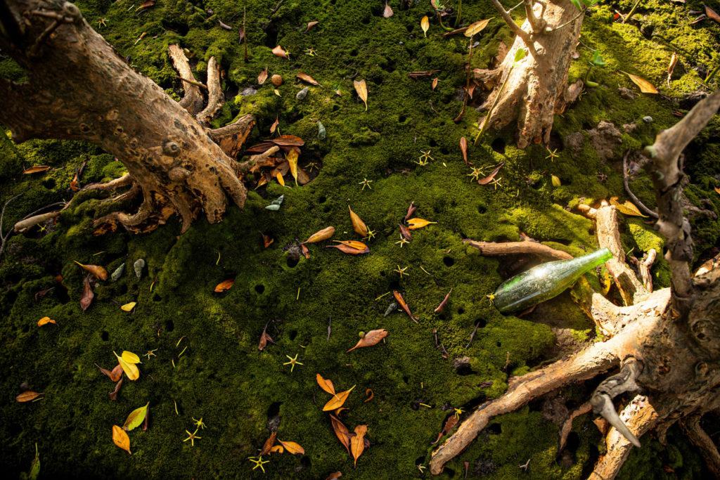 mangroves hong kong
