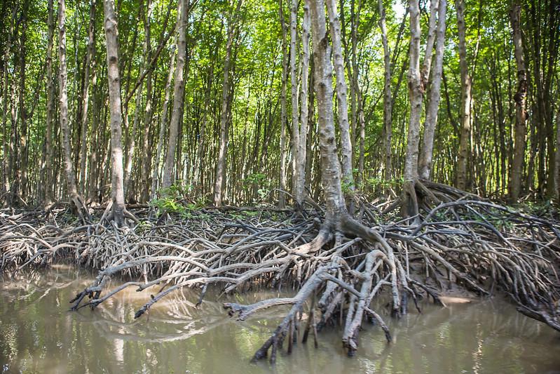 Vietnam Approves $9 Billion Development Within Mangrove Reserve