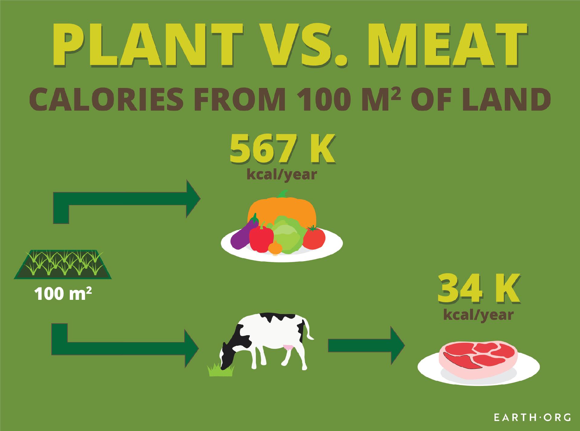 plant versus meat calorie comparison