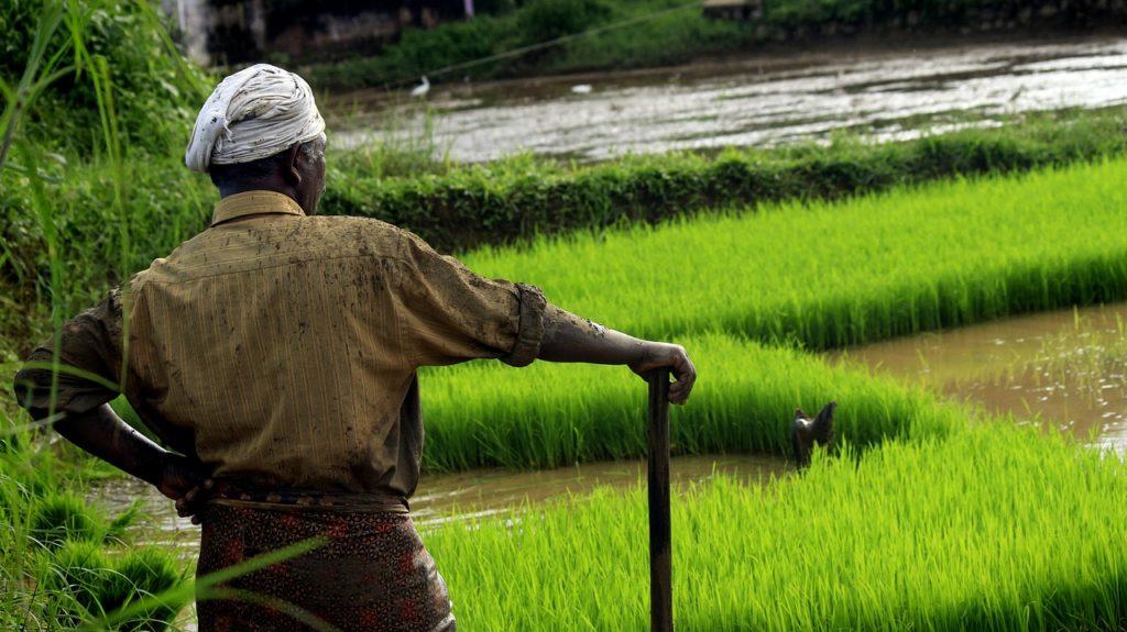 Public Outcry in India Over New 'Anti-Environment' Legislation