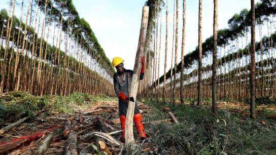 12 Major Companies Responsible for Deforestation