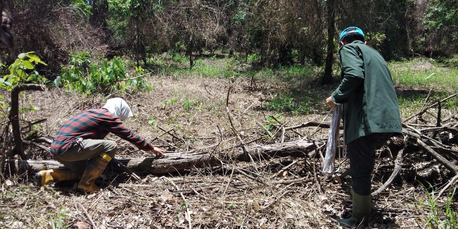 regrow borneo rainforest