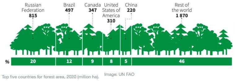deforestation russia
