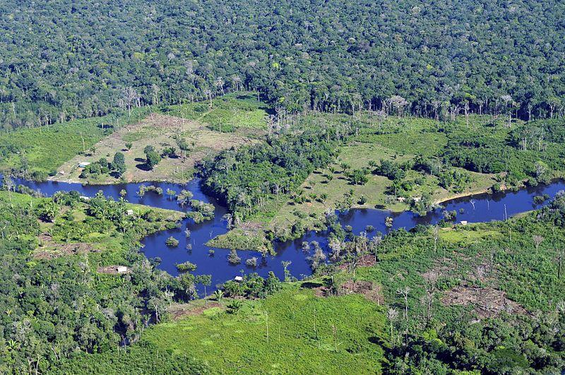 Deforestation in Brazilian Amazon Soars to a 12-Year High