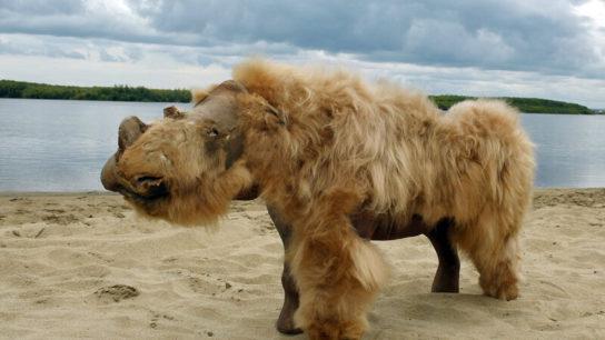 Why did the woolly rhino go extinct?
