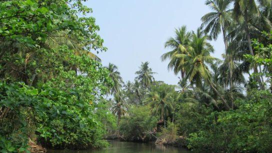 Sri Lanka Replanting Bid Begins After Minister is Held Liable for Deforestation