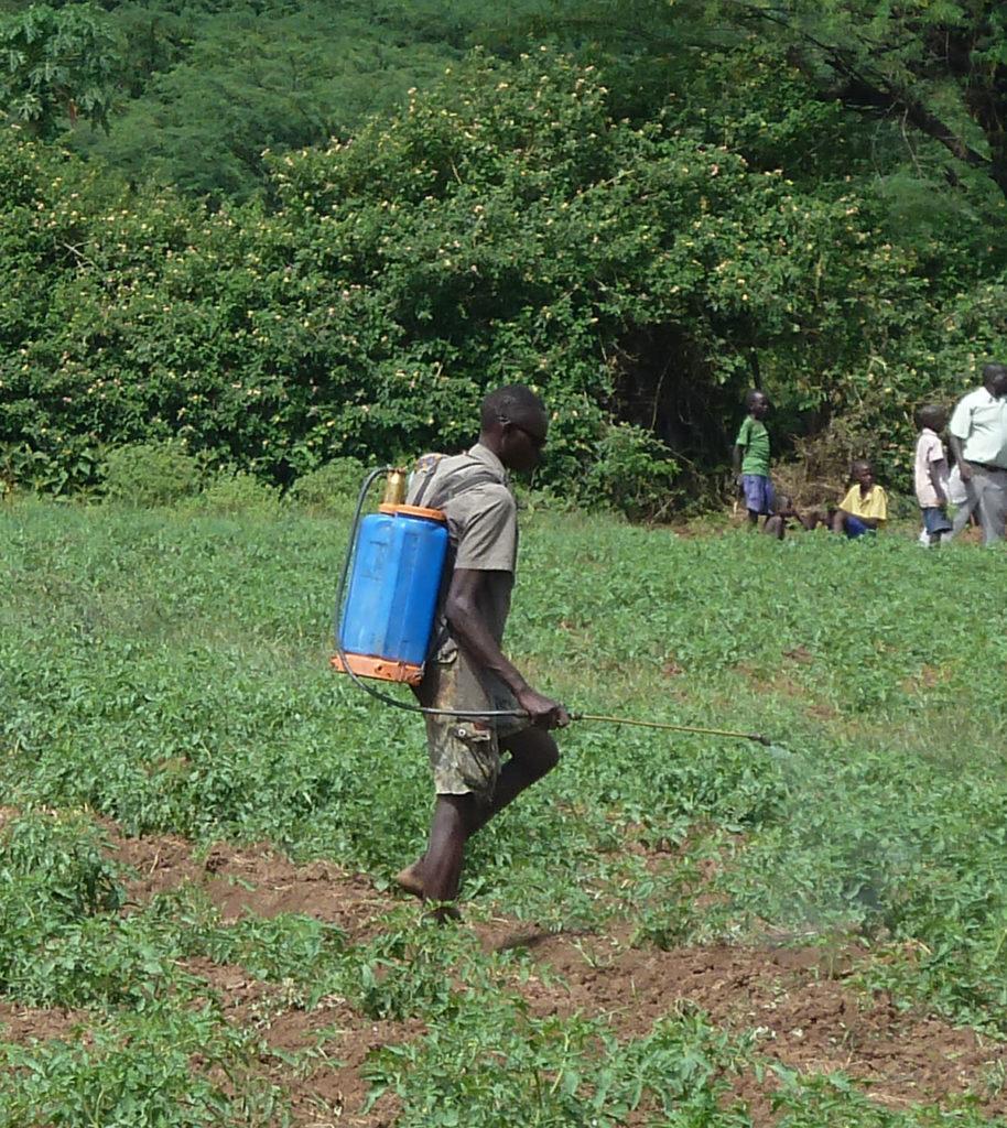 pesticides locusts