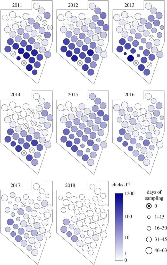 Vaquita population counts 2020