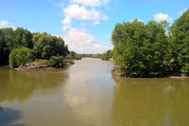 vietnam mangroves