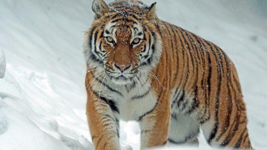 The New 'Big 5' Picks the World's Most Photogenic Animals