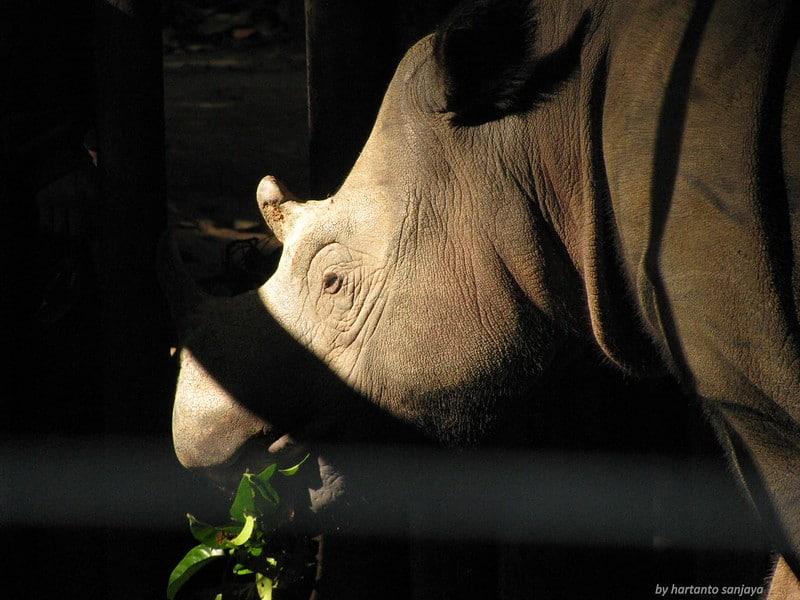 Development of Third Sumatran Rhino Sanctuary Advances to Save Species