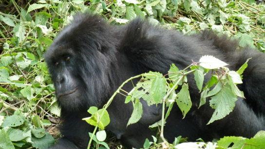 Deforestation Spikes in Virunga National Park, DRC