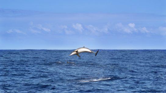 Western Indian Ocean Region Has Designated 550,000 Sq Km as Protected