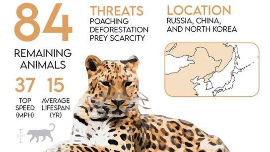 Is The 6th Mass Extinction Underway?