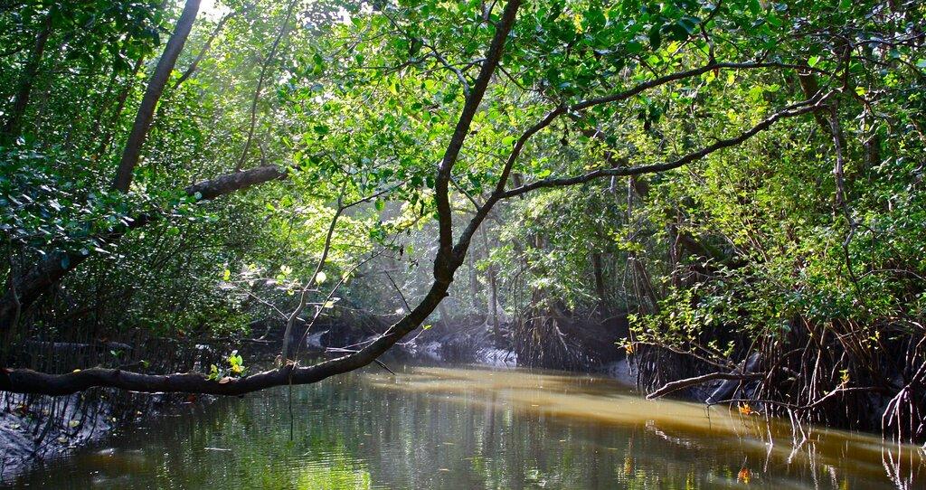 Daintree Rainforest: World's Oldest Rainforest Returns to Australian Aboriginal People